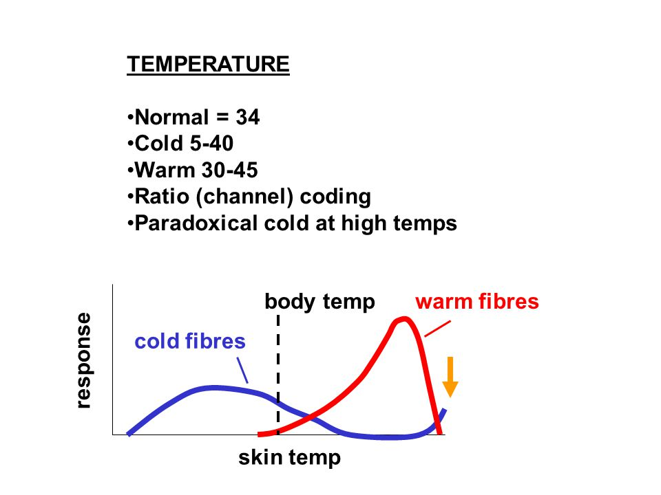 TEMPERATURE Normal = 34 Cold 5-40 Warm 30-45 Ratio (channel) coding Paradoxical cold at high temps cold fibres warm fibresbody temp skin temp response