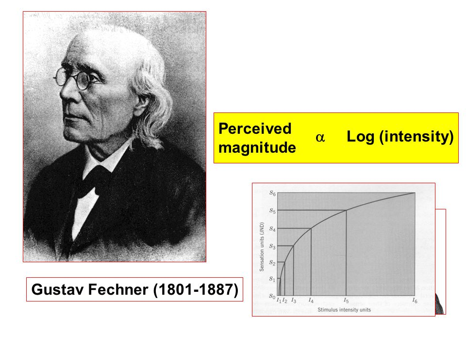 Gustav Fechner (1801-1887) Perceived magnitude  Log (intensity)