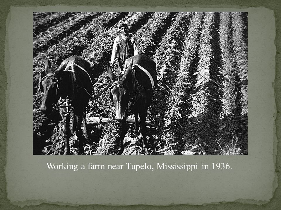 Working a farm near Tupelo, Mississippi in 1936.