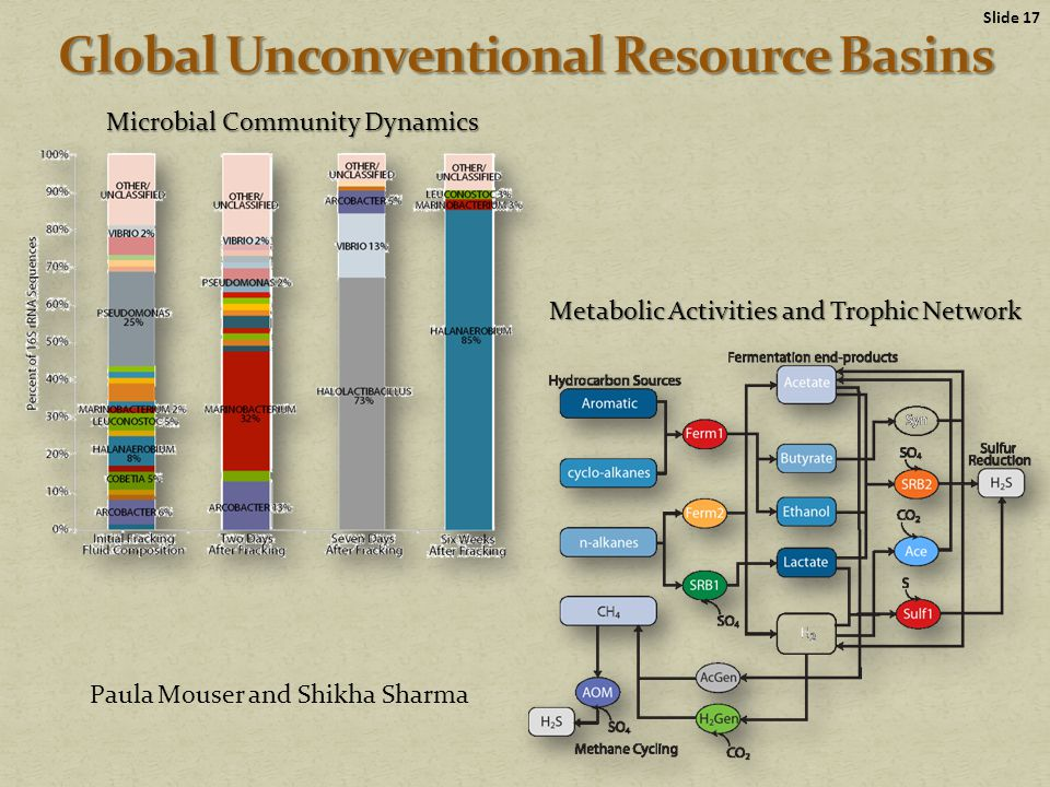 Slide 17 Metabolic Activities and Trophic Network Microbial Community Dynamics Paula Mouser and Shikha Sharma