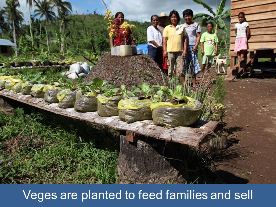 Veges are planted to feed families and sell