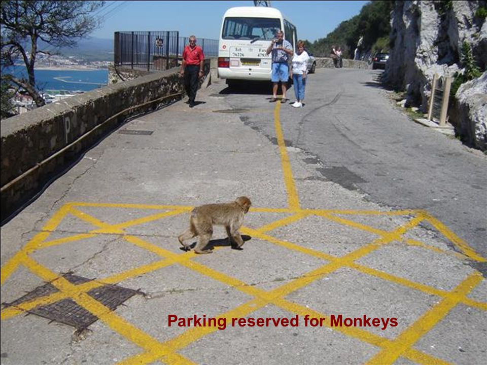 The monkeys do their best to charm and distract before making off with the loot. They have learned to smile in front of cameras and mimic snapping a p