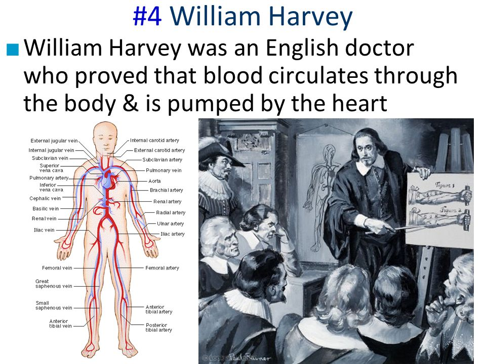#4 William Harvey ■ William Harvey was an English doctor who proved that blood circulates through the body & is pumped by the heart