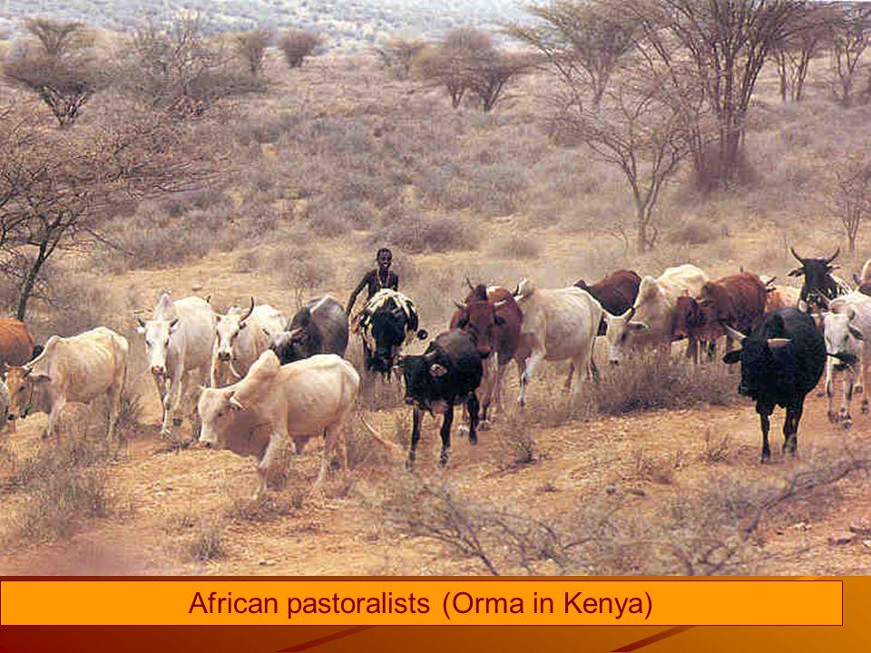African pastoralists (Orma in Kenya)