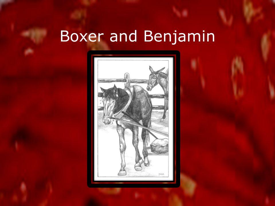 Boxer and Benjamin
