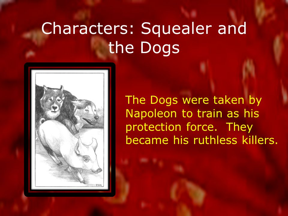 Characters: Squealer and the Dogs The Dogs were taken by Napoleon to train as his protection force.