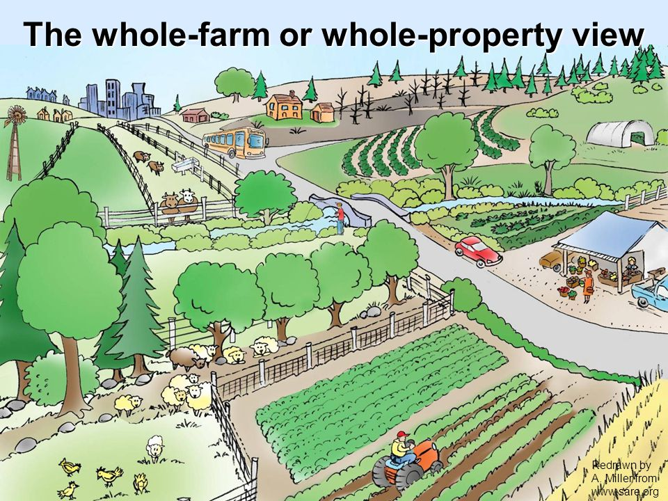 The whole-farm or whole-property view Redrawn by A. Miller from www.sare.org
