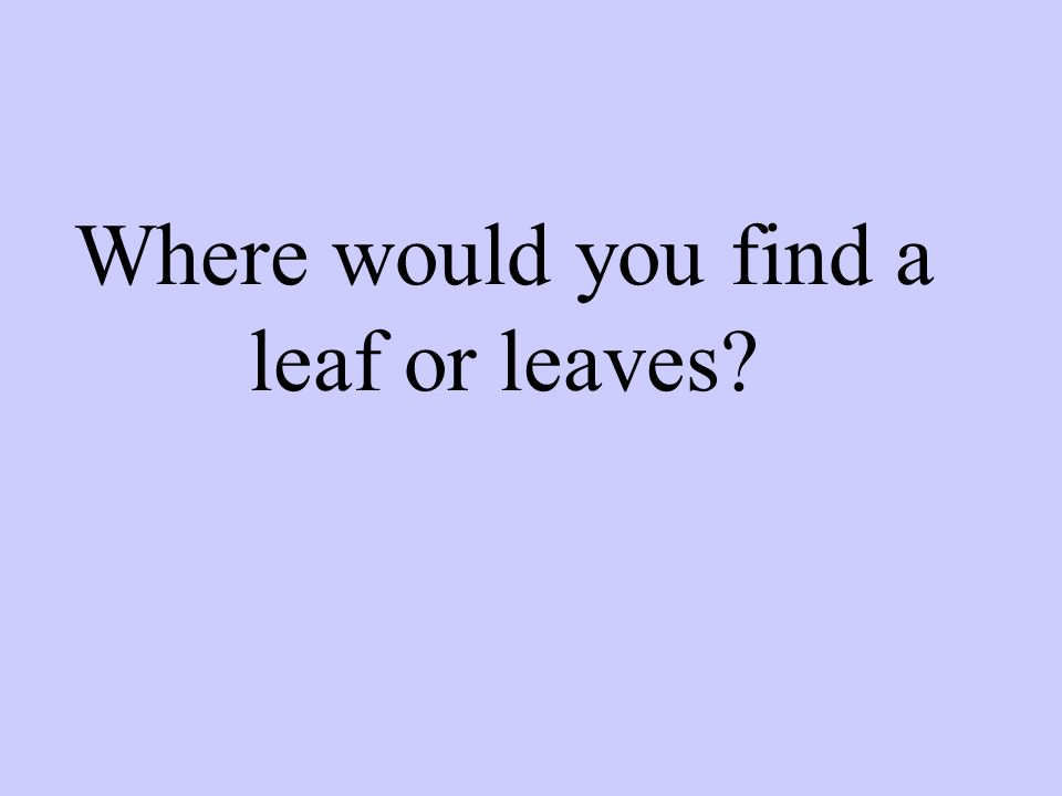 Where would you find a leaf or leaves