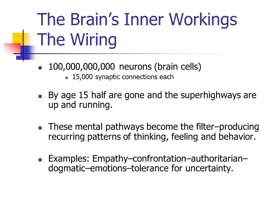 The Brain's Inner Workings The Wiring 100,000,000,000 neurons (brain cells) 15,000 synaptic connections each By age 15 half are gone and the superhighways are up and running.