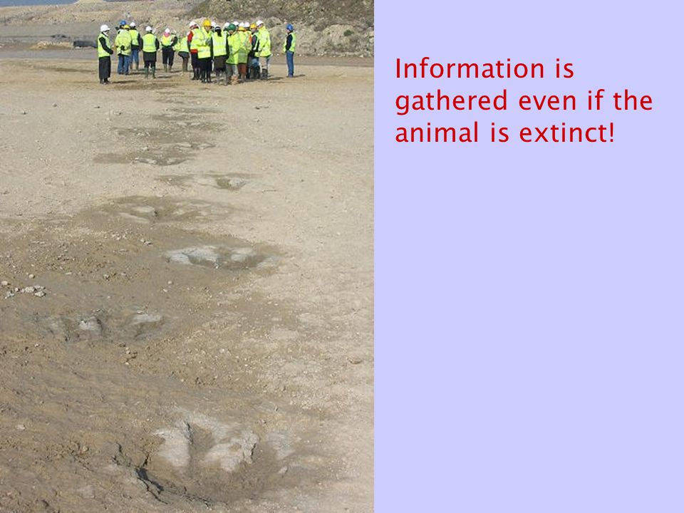 Information is gathered even if the animal is extinct!