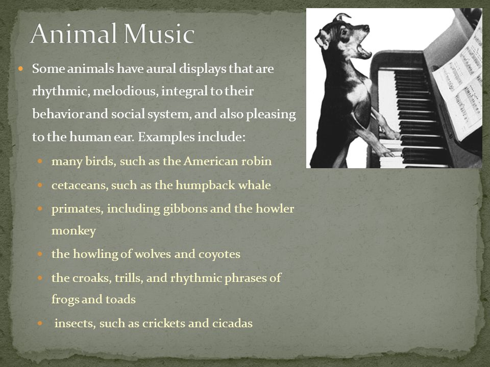 Some animals have aural displays that are rhythmic, melodious, integral to their behavior and social system, and also pleasing to the human ear.