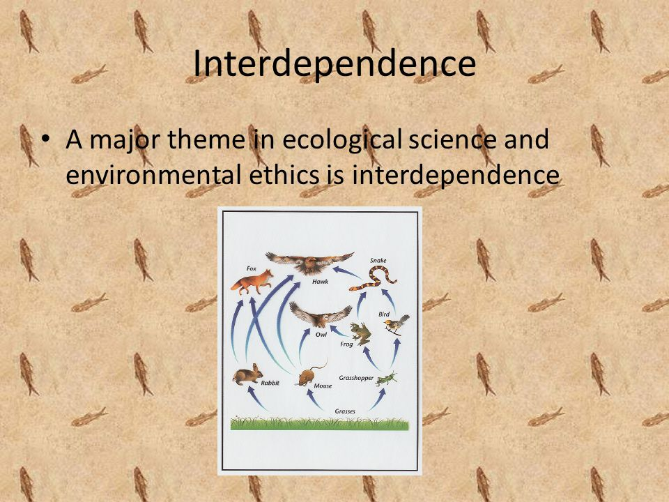 Interdependence A major theme in ecological science and environmental ethics is interdependence