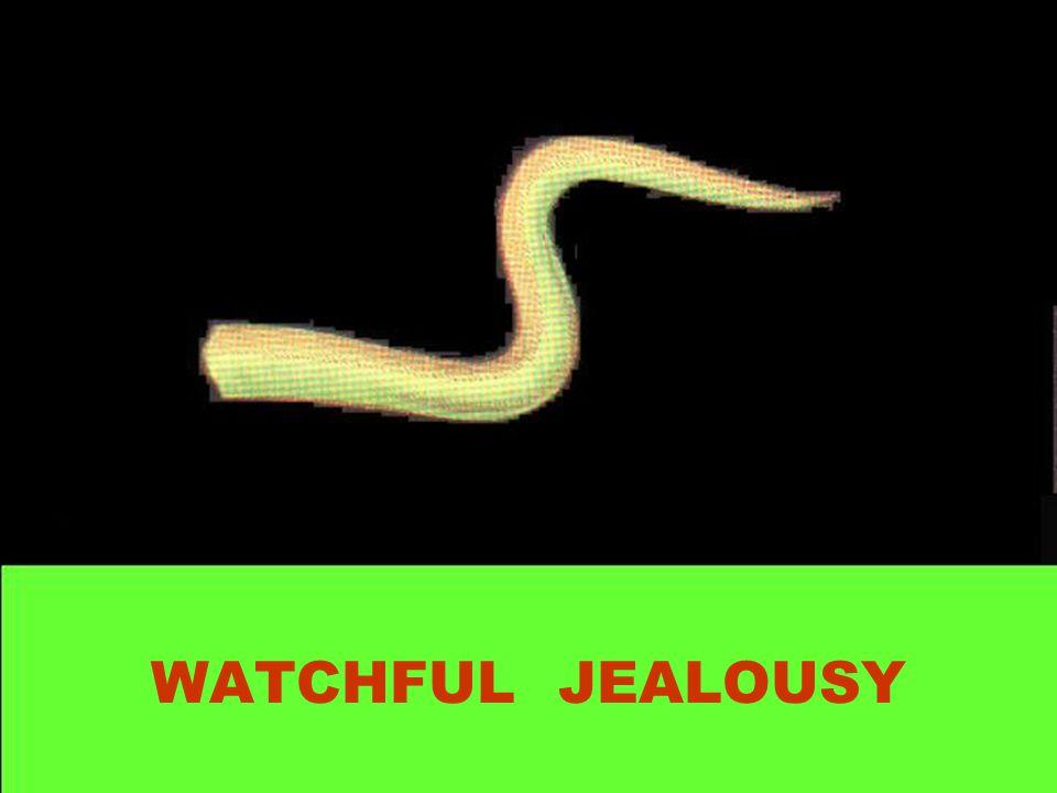WATCHFUL JEALOUSY