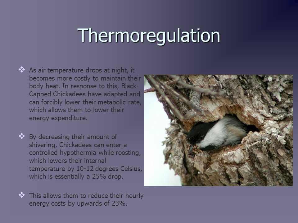 Thermoregulation   As air temperature drops at night, it becomes more costly to maintain their body heat.
