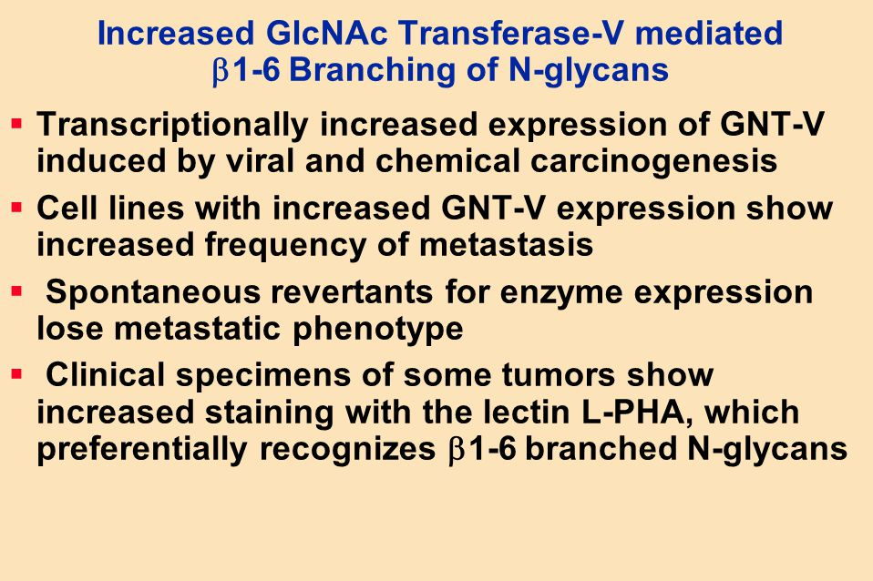 Increased GlcNAc Transferase-V mediated  1-6 Branching of N-glycans  Transcriptionally increased expression of GNT-V induced by viral and chemical c