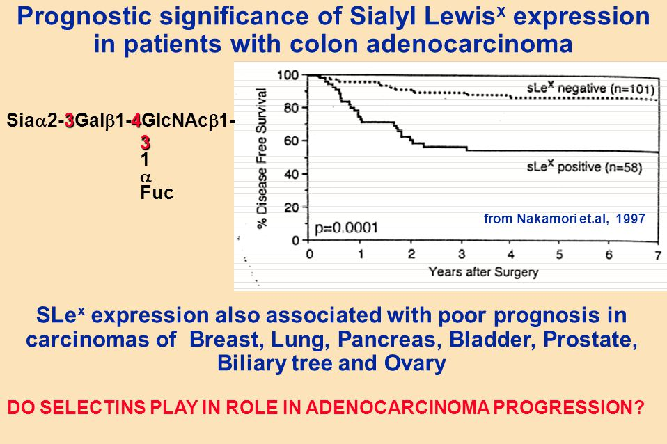 from Nakamori et.al, 1997 Prognostic significance of Sialyl Lewis x expression in patients with colon adenocarcinoma SLe x expression also associated