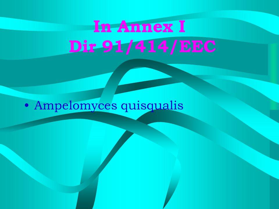 In Annex I Dir 91/414/EEC Ampelomyces quisqualis