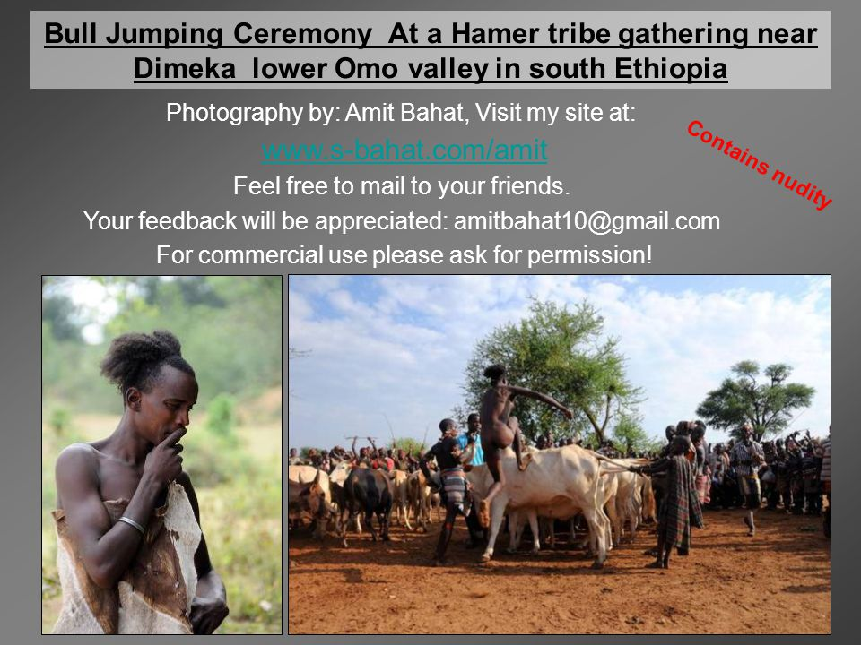 Bull Jumping Ceremony At a Hamer tribe gathering near Dimeka lower Omo valley in south Ethiopia Photography by: Amit Bahat, Visit my site at: www.s-bahat.com/amit Feel free to mail to your friends.