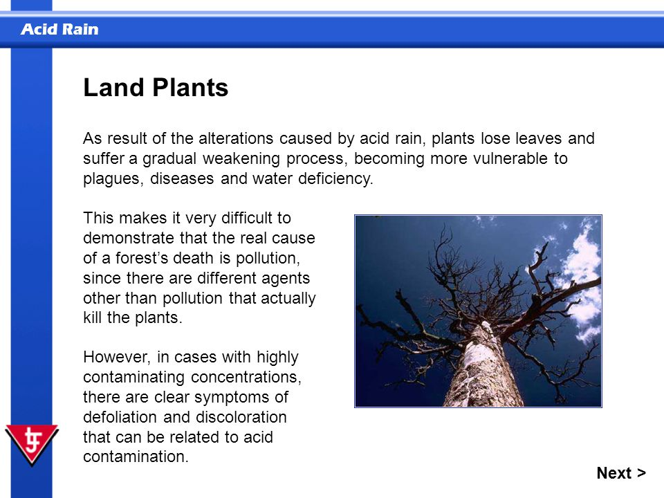 Acid Rain Land Plants This makes it very difficult to demonstrate that the real cause of a forest's death is pollution, since there are different agen