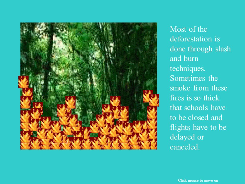 When the forest is cut, the area surrounding the cut loses moisture. This area of the the forest dies quickly. Click mouse to move on