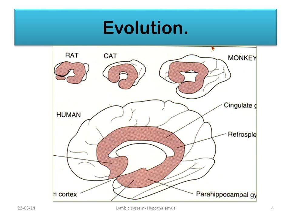 23-03-14 Evolution. Lymbic system- Hypothalamus4