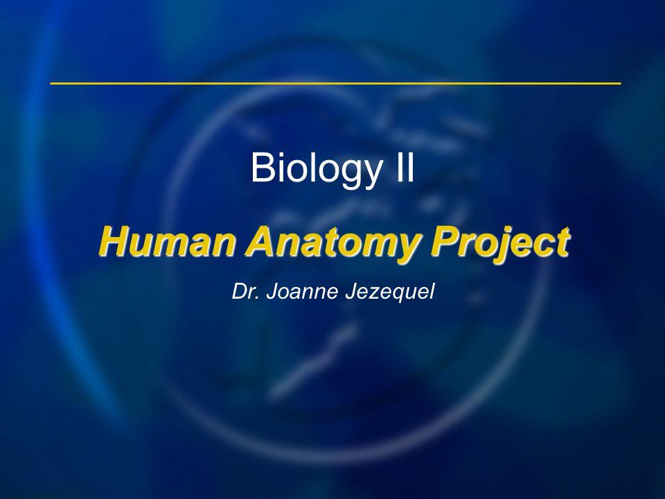 Biology II Human Anatomy Project Dr. Joanne Jezequel