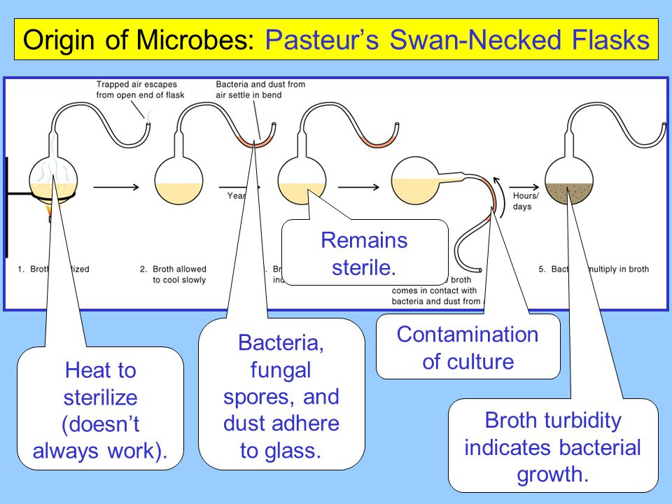 Heat to sterilize (doesn't always work). Bacteria, fungal spores, and dust adhere to glass. Remains sterile. Contamination of culture Broth turbidity