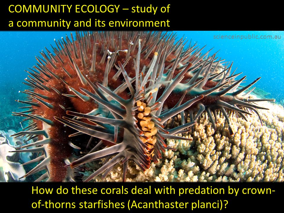 ECOSYSTEM ECOLOGY – study of an ecosystem in its entirety How do caldera lakes react to increased agricultural activity in surrounding forests.