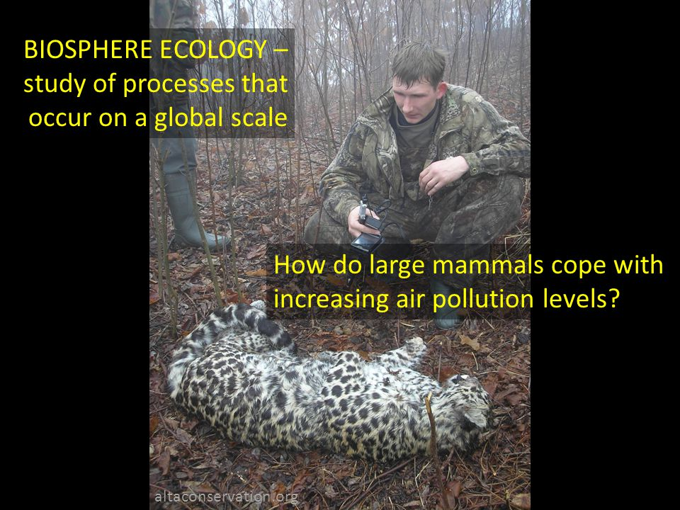 BIOSPHERE ECOLOGY – study of processes that occur on a global scale How do large mammals cope with increasing air pollution levels.
