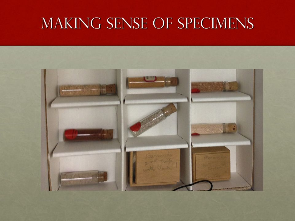 Making Sense of Specimens