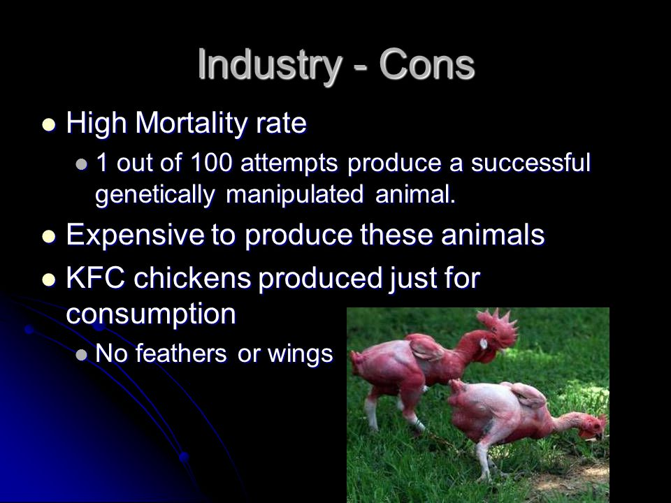 Industry - Cons High Mortality rate High Mortality rate 1 out of 100 attempts produce a successful genetically manipulated animal. 1 out of 100 attemp