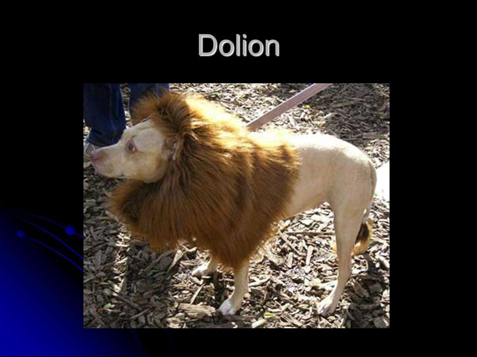 Dolion