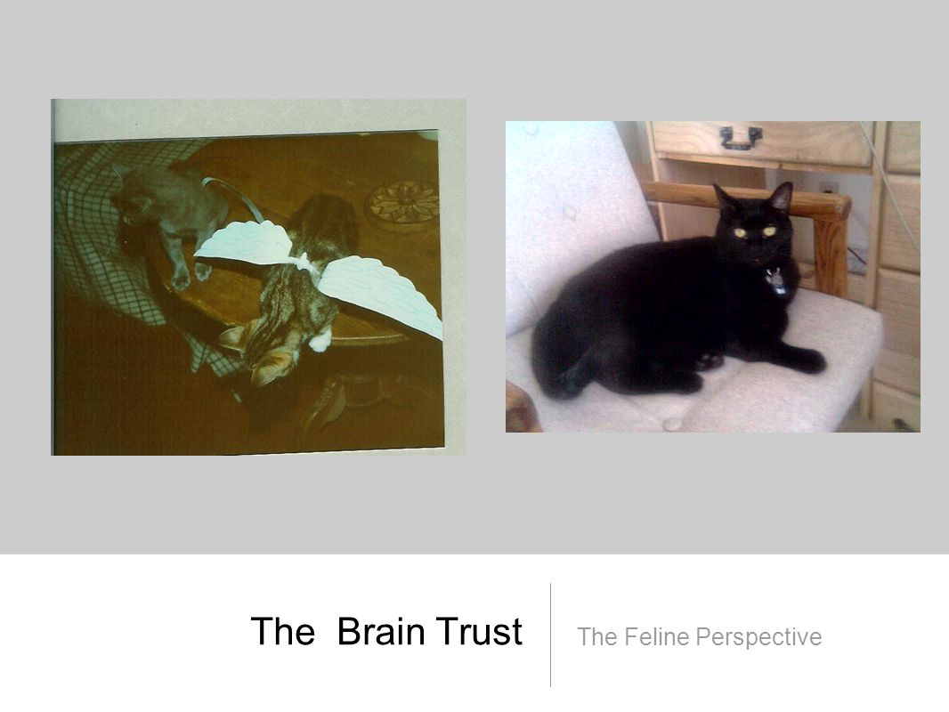 The Brain Trust The Feline Perspective