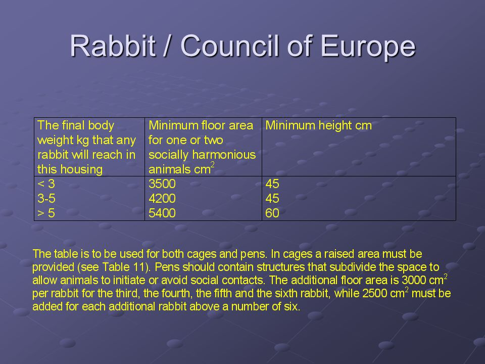 Rabbit / Council of Europe