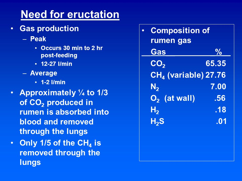 Need for eructation Gas production –Peak Occurs 30 min to 2 hr post-feeding 12-27 l/min –Average 1-2 l/min Approximately ¼ to 1/3 of CO 2 produced in rumen is absorbed into blood and removed through the lungs Only 1/5 of the CH 4 is removed through the lungs Composition of rumen gas __Gas__ _%__ CO 2 65.35 CH 4 (variable) 27.76 N 2 7.00 O 2 (at wall).56 H 2.18 H 2 S.01