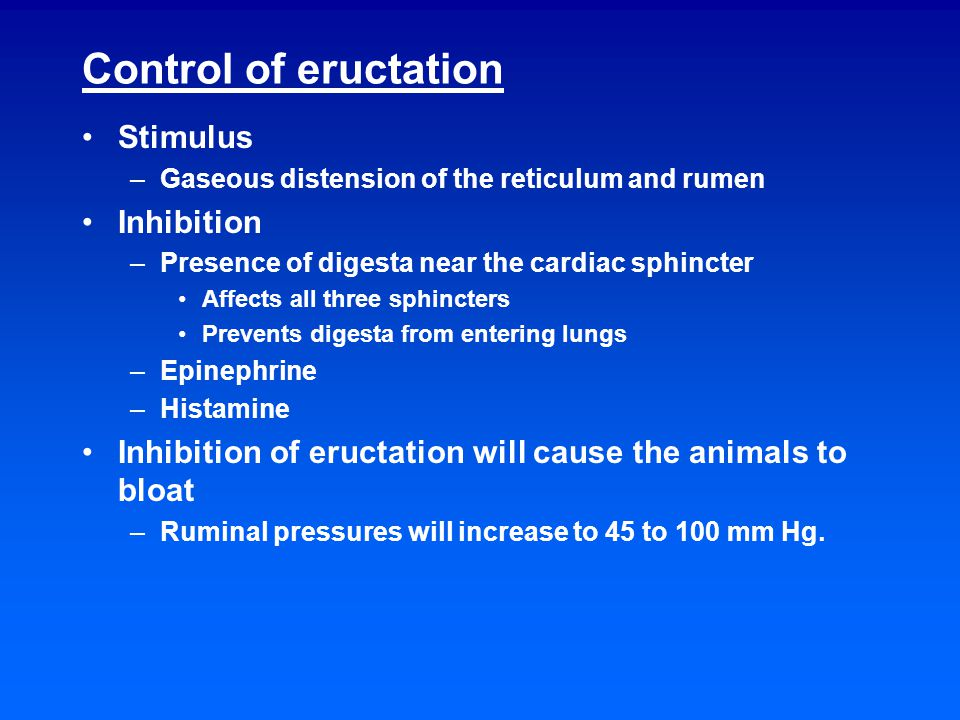 Control of eructation Stimulus –Gaseous distension of the reticulum and rumen Inhibition –Presence of digesta near the cardiac sphincter Affects all three sphincters Prevents digesta from entering lungs –Epinephrine –Histamine Inhibition of eructation will cause the animals to bloat –Ruminal pressures will increase to 45 to 100 mm Hg.