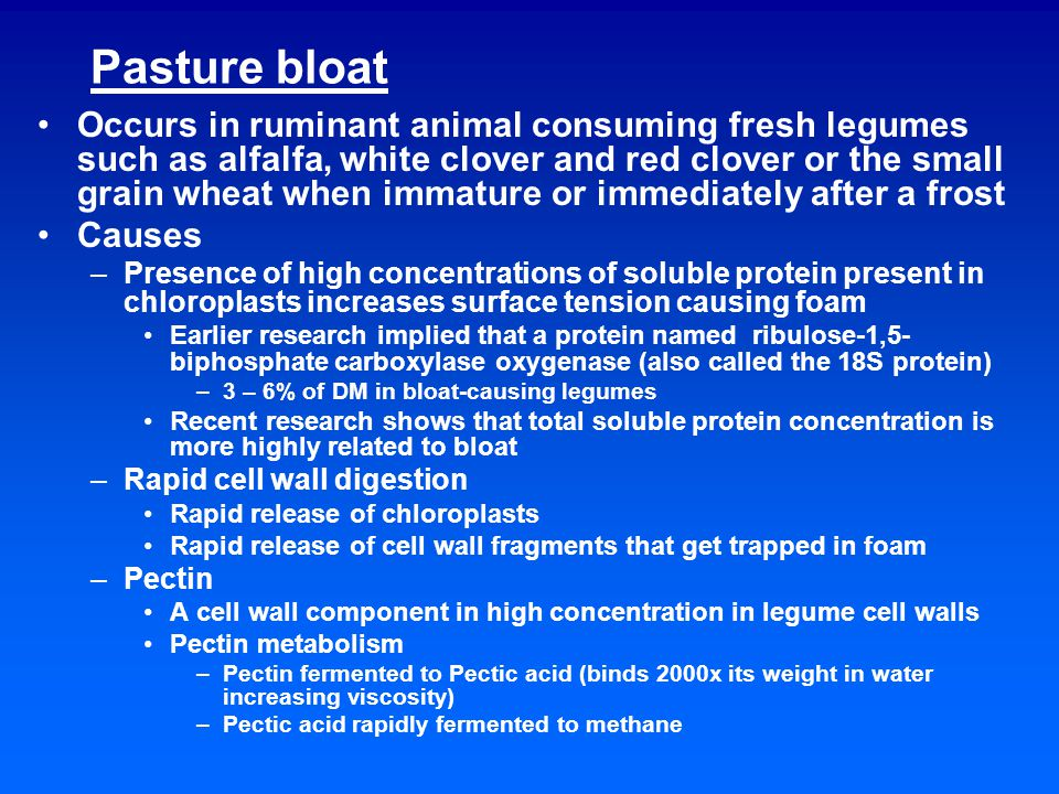 Pasture bloat Occurs in ruminant animal consuming fresh legumes such as alfalfa, white clover and red clover or the small grain wheat when immature or immediately after a frost Causes –Presence of high concentrations of soluble protein present in chloroplasts increases surface tension causing foam Earlier research implied that a protein named ribulose-1,5- biphosphate carboxylase oxygenase (also called the 18S protein) –3 – 6% of DM in bloat-causing legumes Recent research shows that total soluble protein concentration is more highly related to bloat –Rapid cell wall digestion Rapid release of chloroplasts Rapid release of cell wall fragments that get trapped in foam –Pectin A cell wall component in high concentration in legume cell walls Pectin metabolism –Pectin fermented to Pectic acid (binds 2000x its weight in water increasing viscosity) –Pectic acid rapidly fermented to methane