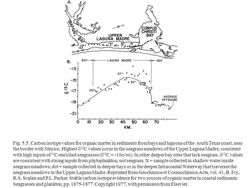Fig. 5.5. Carbon isotope values for organic matter in sediments from bays and lagoons of the south Texas coast, near the border with Mexico. Highest 