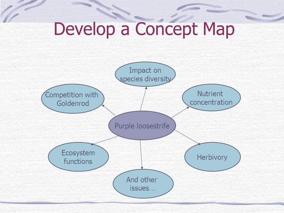 Develop a Concept Map Purple loosestrife Competition with Goldenrod Ecosystem functions Nutrient concentration Herbivory And other issues … Impact on species diversity