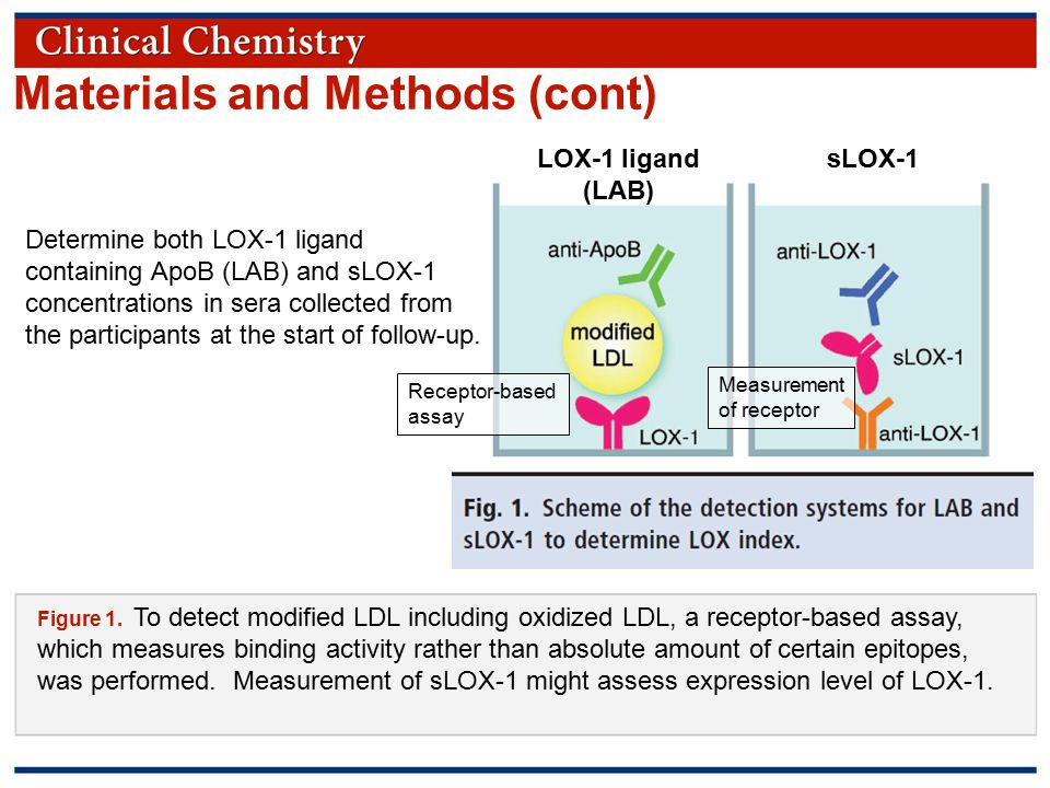 © Copyright 2009 by the American Association for Clinical Chemistry Question  What would be a good strategy for risk stratification of CHD and stroke, if you have measured LOX-1 ligand and sLOX-1?