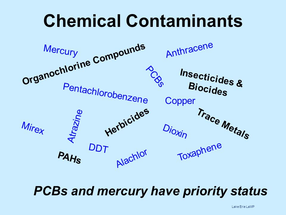 Chemical Contaminants PCBs and mercury have priority status Organochlorine Compounds Trace Metals PAHs Herbicides Insecticides & Biocides DDT Copper Mercury PCBs Dioxin Atrazine Anthracene Mirex Pentachlorobenzene Toxaphene Alachlor Lake Erie LaMP