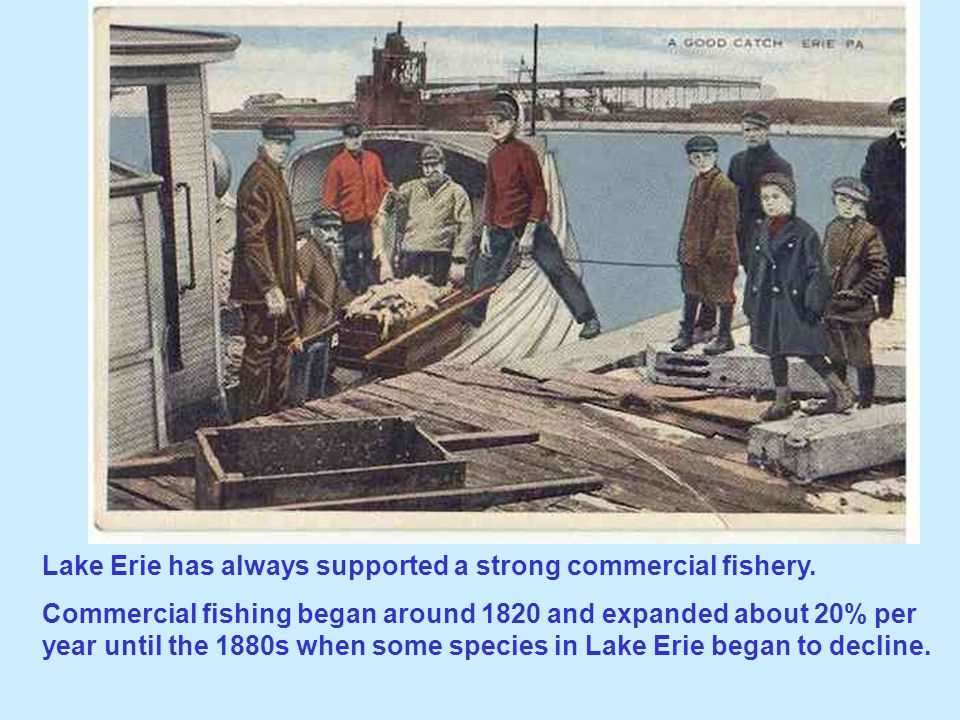 Lake Erie has always supported a strong commercial fishery.