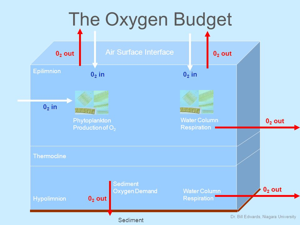 The Oxygen Budget Air Surface Interface 0 2 in Phytoplankton Production of O 2 Water Column Respiration 0 2 out Epilimnion Thermocline Hypolimnion Water Column Respiration 0 2 out Sediment 0 2 out Sediment Oxygen Demand 0 2 out 0 2 in Dr.