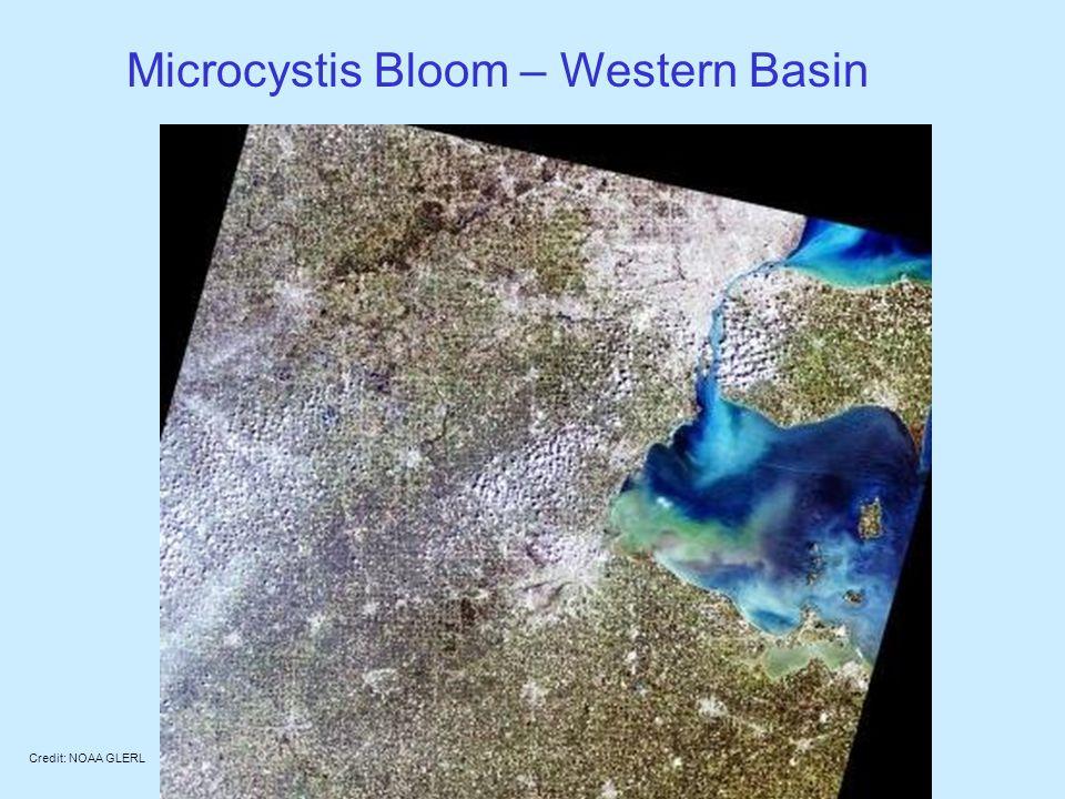 Microcystis Bloom – Western Basin Credit: NOAA GLERL