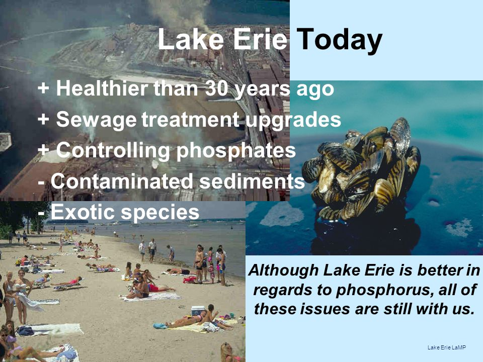 Lake Erie Today + Healthier than 30 years ago + Sewage treatment upgrades + Controlling phosphates - Contaminated sediments - Exotic species Although Lake Erie is better in regards to phosphorus, all of these issues are still with us.