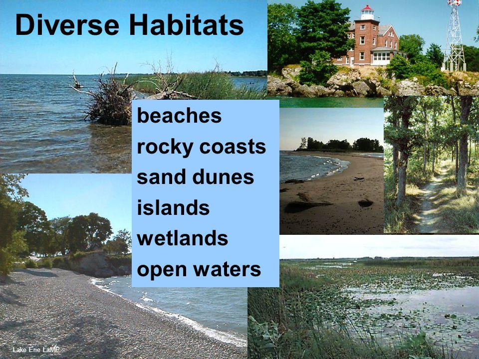 Credit: Loretta Cicerrella Diverse Habitats beaches rocky coasts sand dunes islands wetlands open waters Lake Erie LaMP