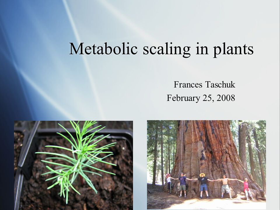 Metabolic scaling in plants Frances Taschuk February 25, 2008 Frances Taschuk February 25, 2008