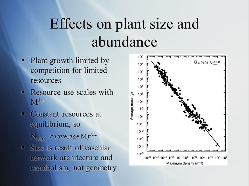 Effects on plant size and abundance  Plant growth limited by competition for limited resources  Resource use scales with M 3/4  Constant resources