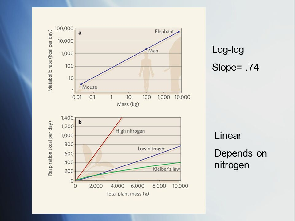 Log-log Slope=.74 Linear Depends on nitrogen