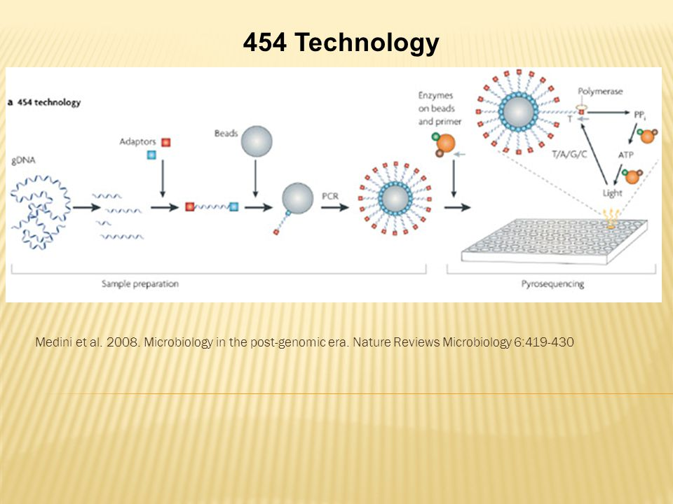 454 Technology Medini et al. 2008. Microbiology in the post-genomic era.